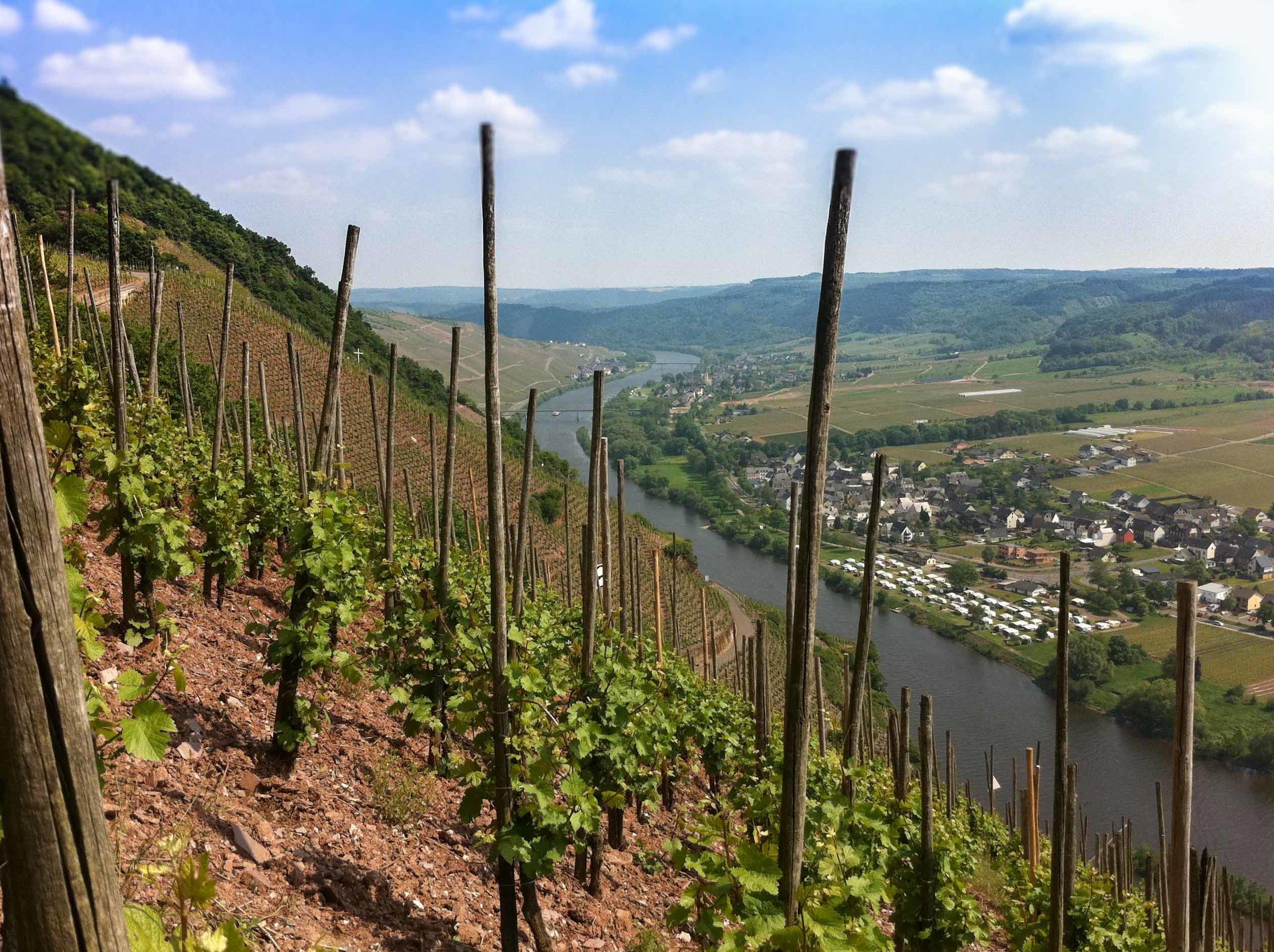 The Würzgarten vineyard-1847.jpg