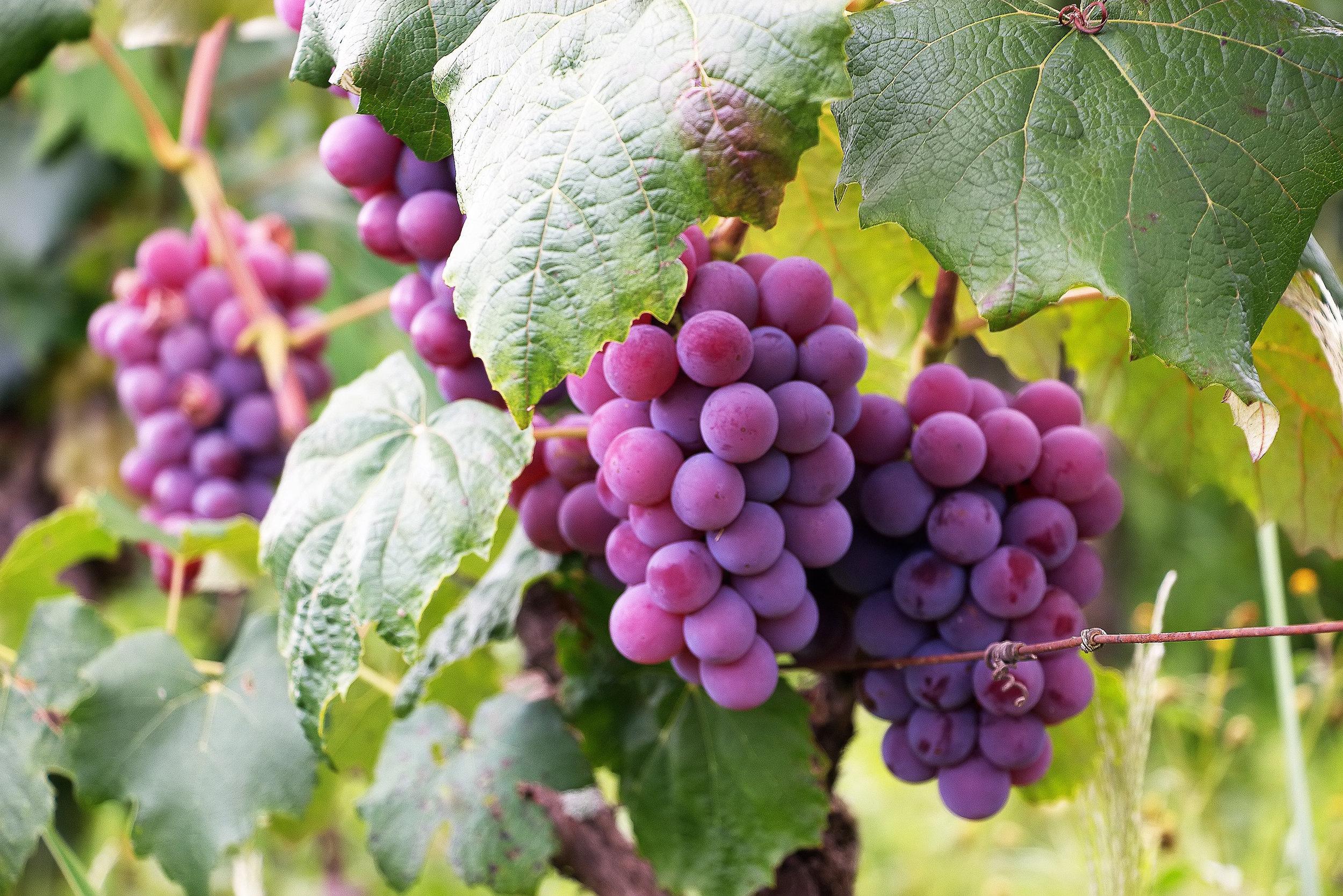 berries-bunch-colors-760281.jpg
