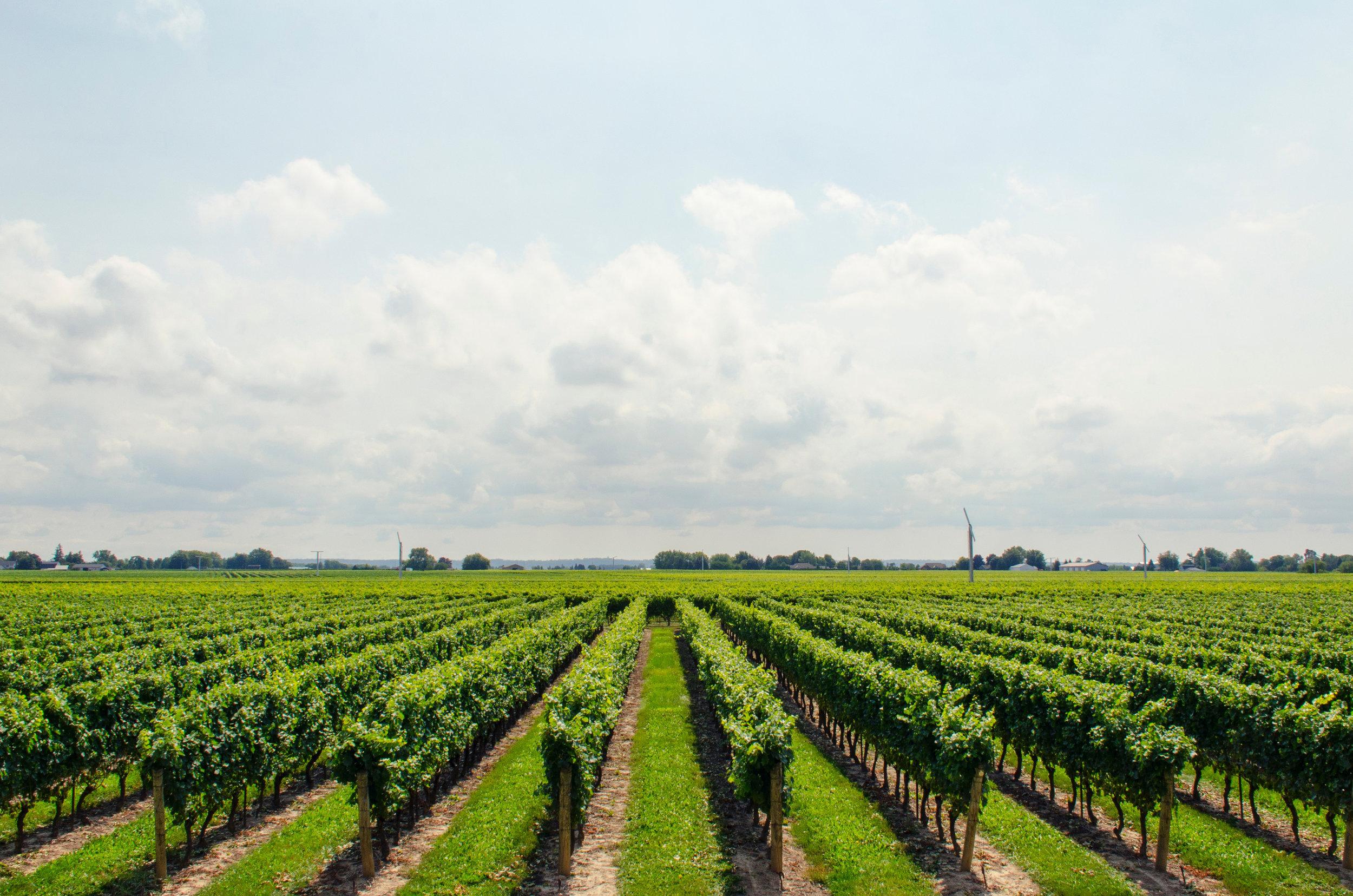 clouds-farm-grapes-21393.jpg