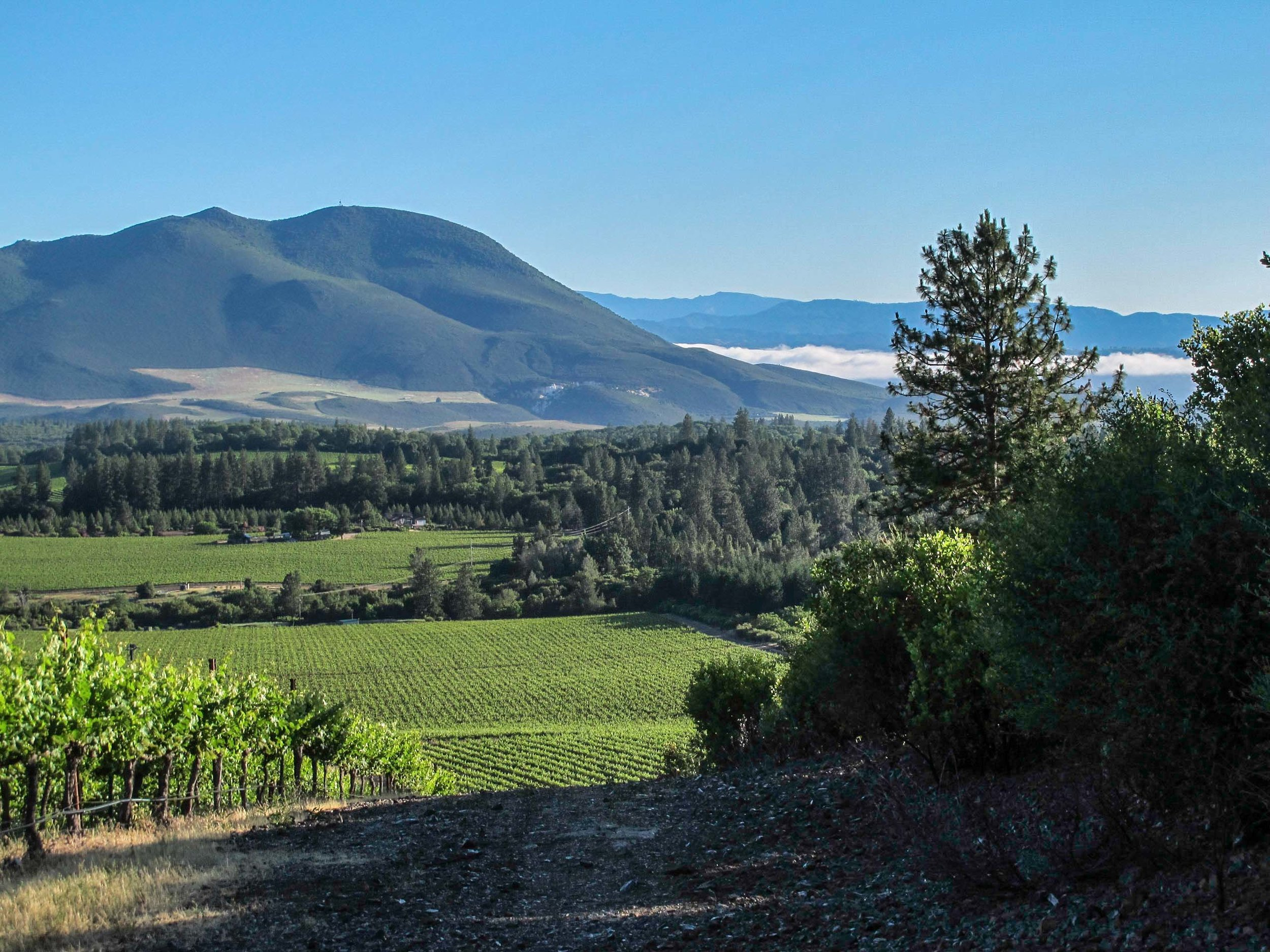 Obsidian Ridge VIneyard, low fog line-.jpg