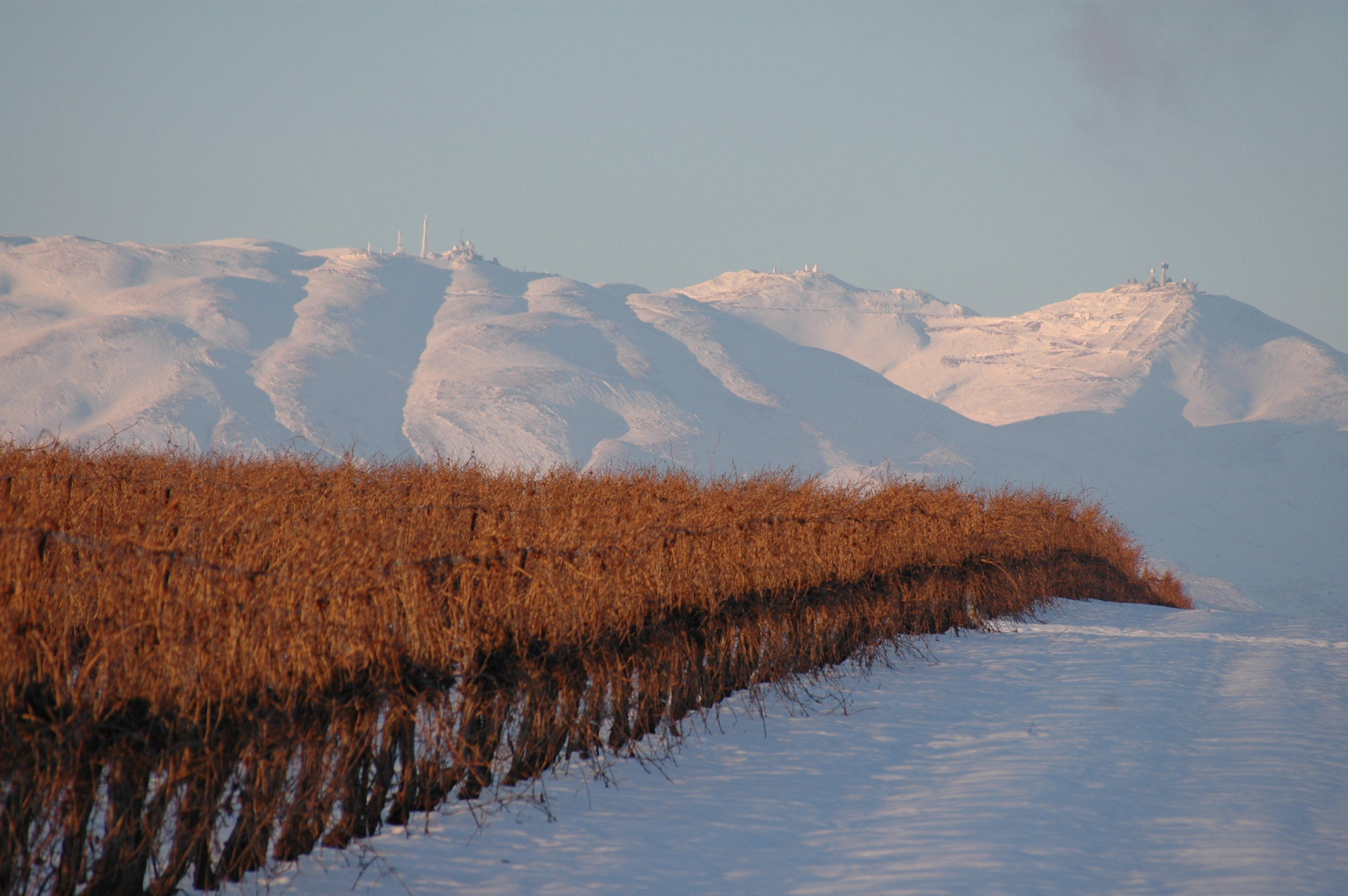 Yarden GHW Elrom vineyards-Winter 2008.jpg