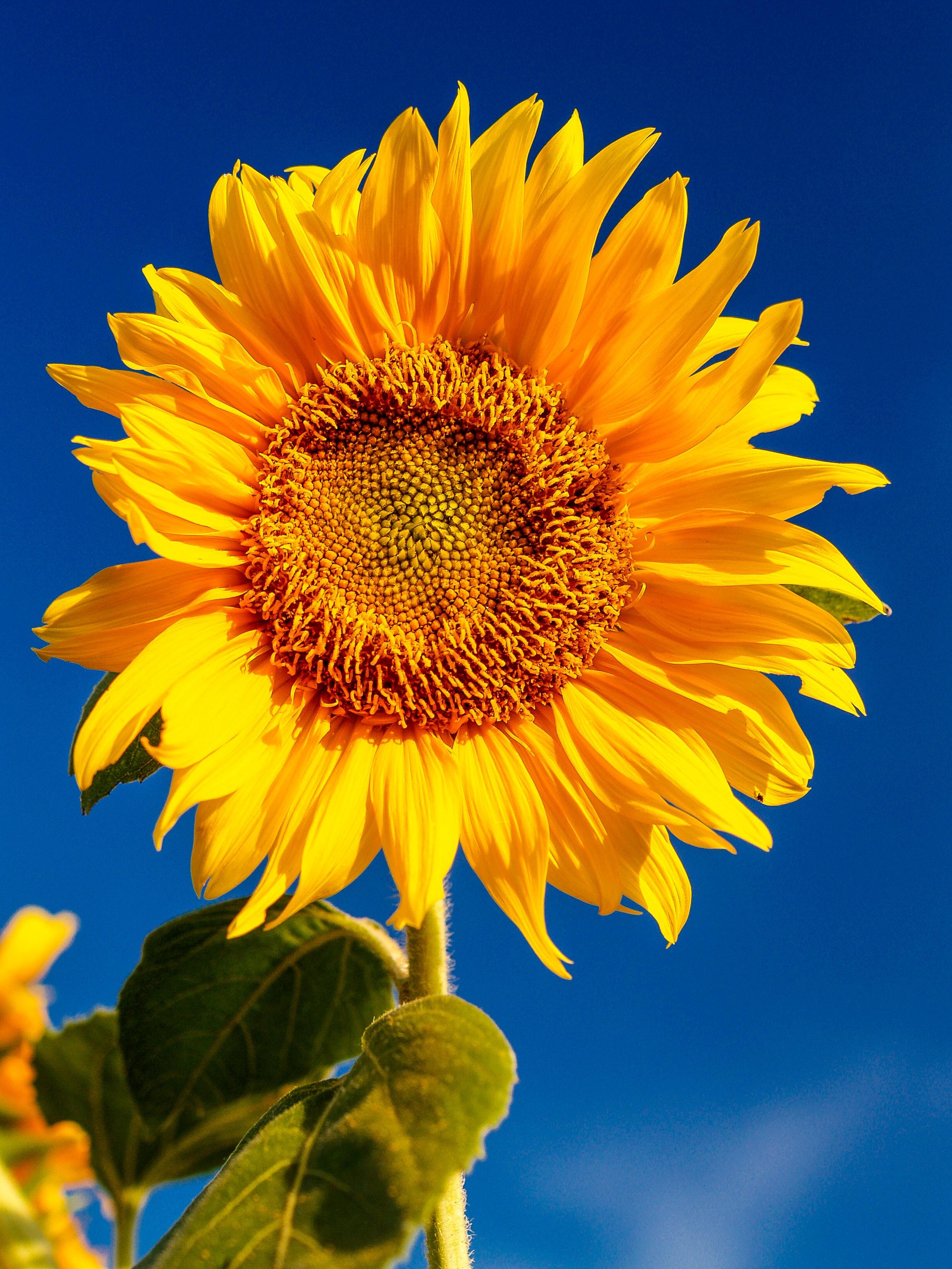 blossom-flora-flower-1214259.jpg