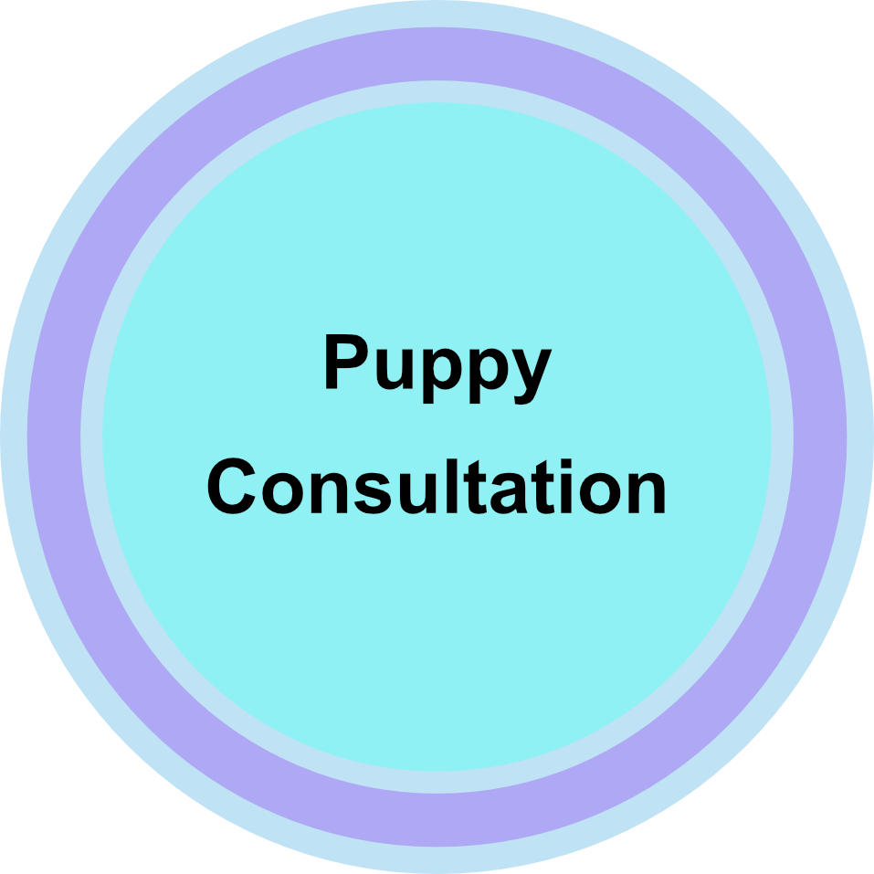 puppy-consultation.png