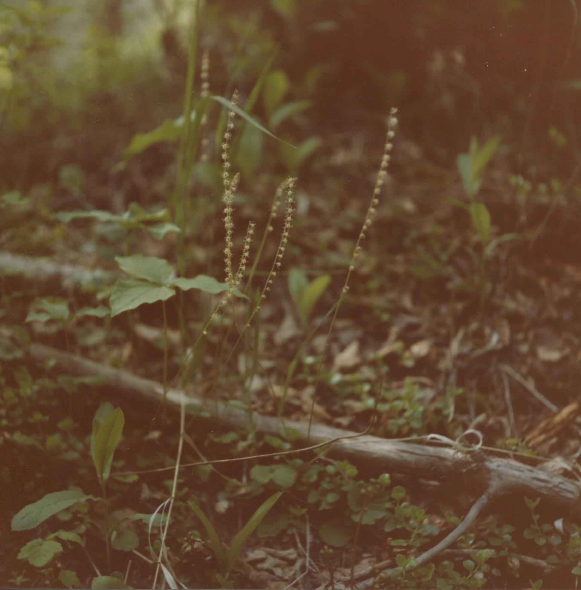 SS_greenery_2.jpg