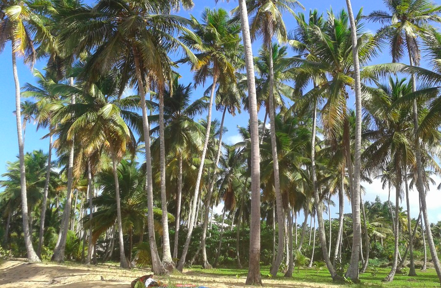 Land for sale coson Las Terrenas beachfront 1.png