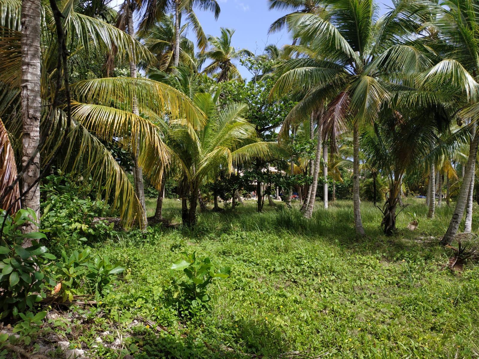 2 lot for sale in los nomadas las terrenas 1.jpeg