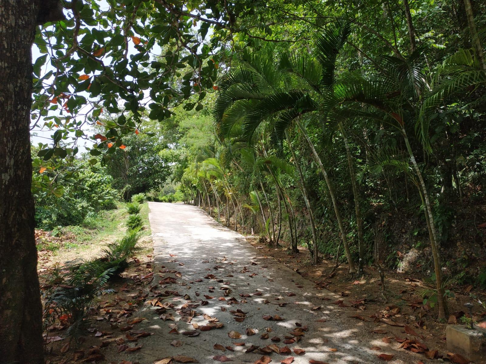 Land to build villa in Las Terrenas DR16.jpeg