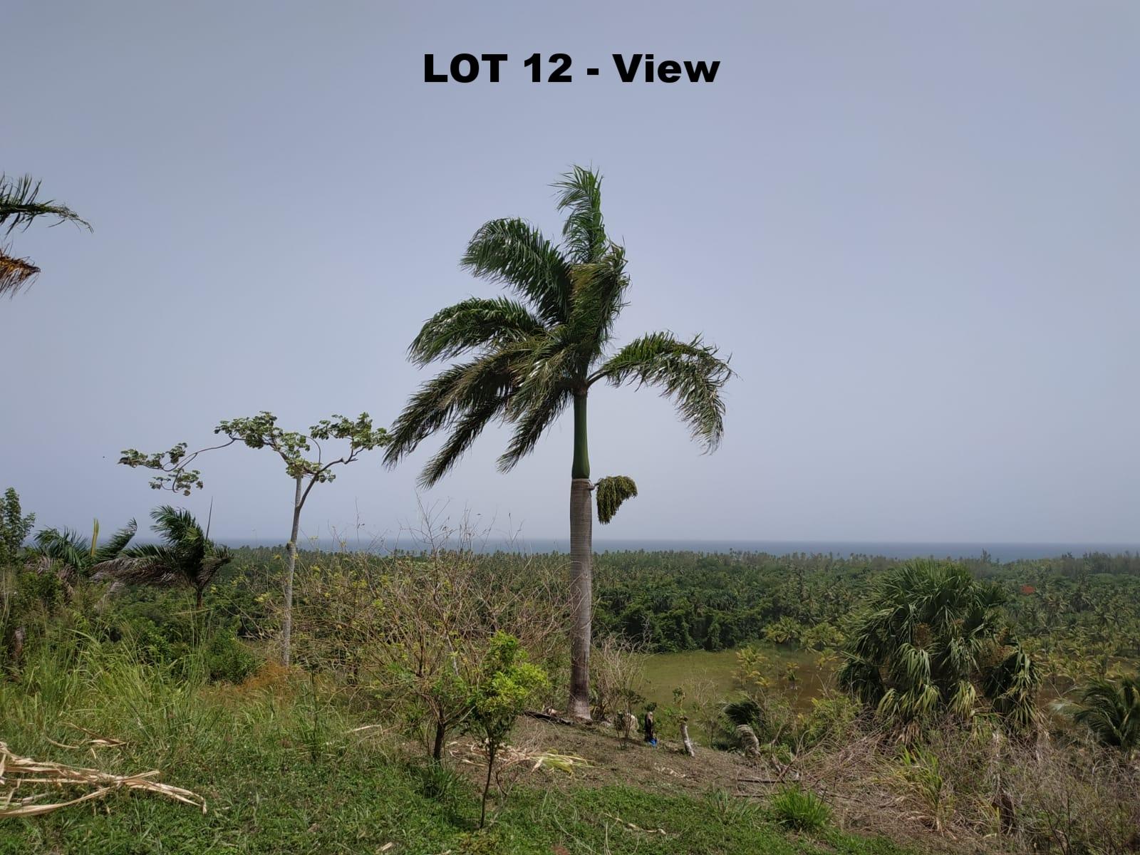 Land to build villa in Las Terrenas DR 1.jpeg