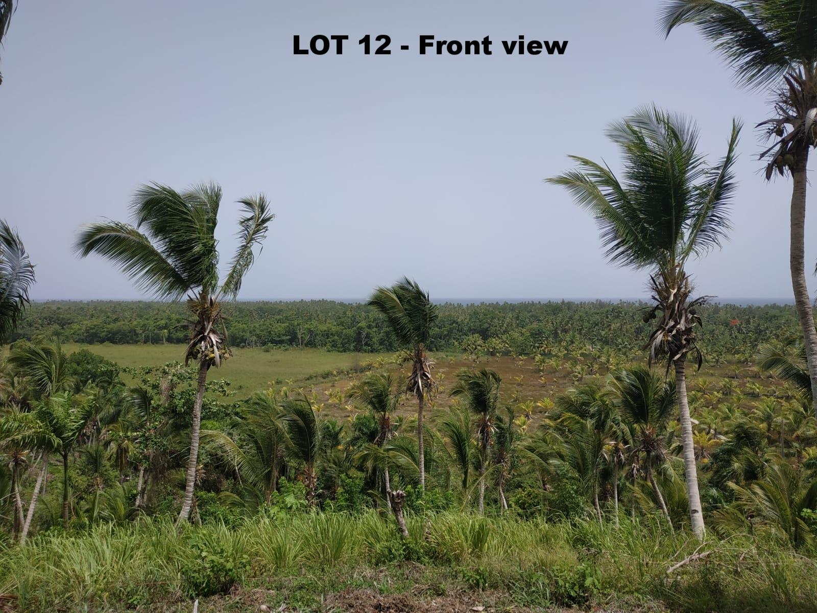 Land to build villa in Las Terrenas DR 7.jpeg