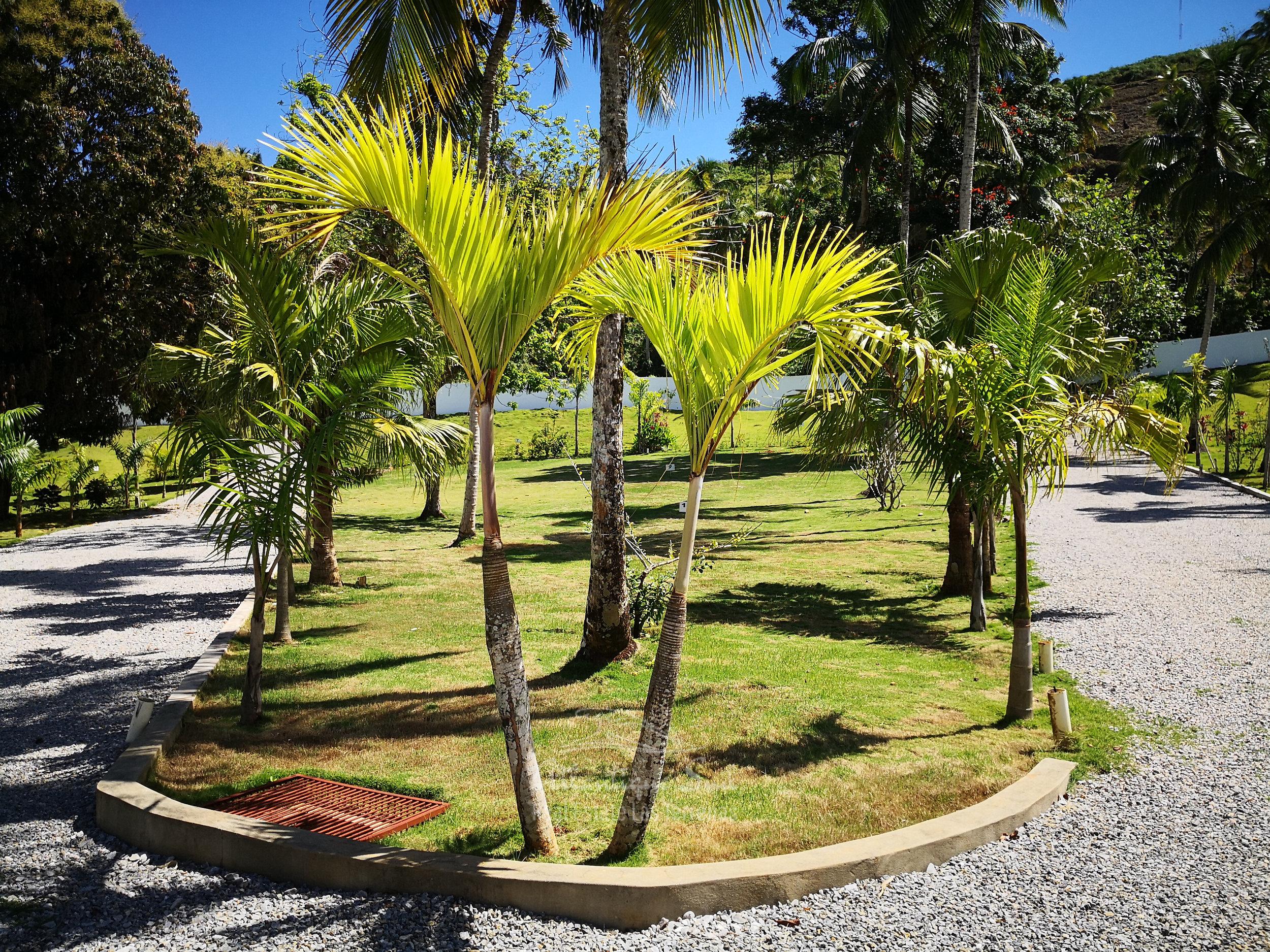 Ready to build lands for sale in Las Terrenas Real Estate Dominican Republic5.jpg