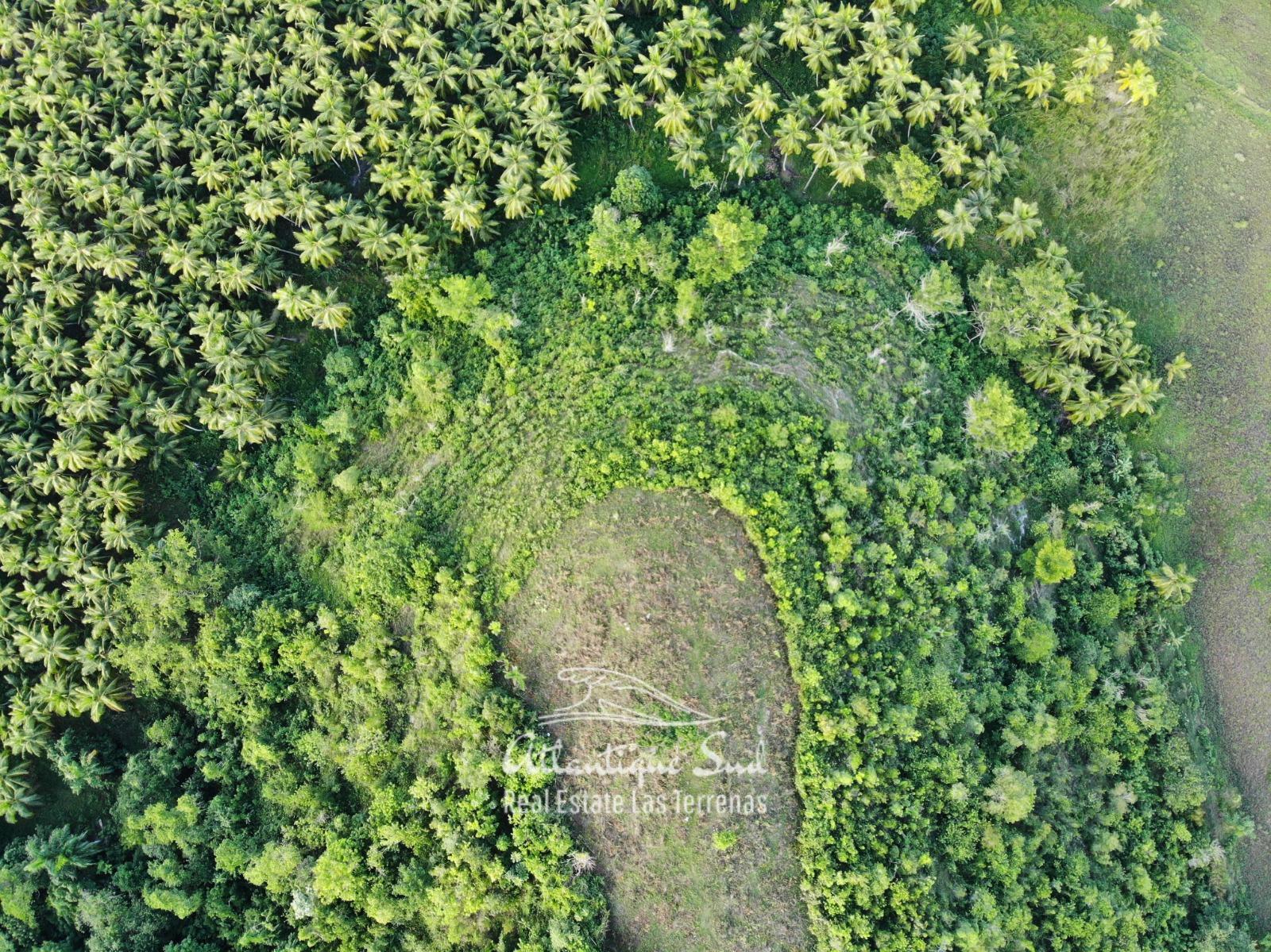 Barbacoa Land for Sale Samana 1.jpeg