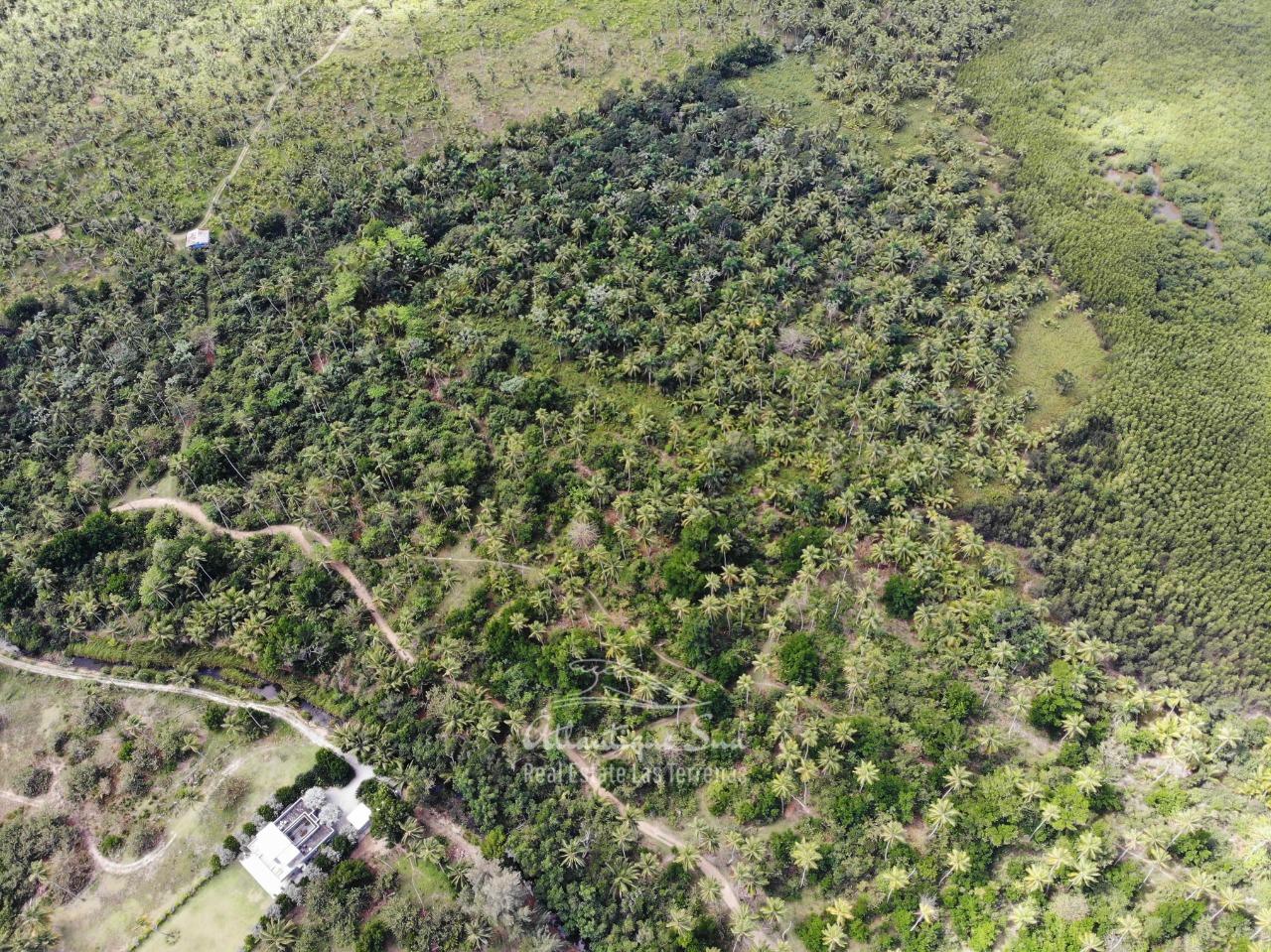 Land for sale El Limon Las Terrenas DR 9.jpeg