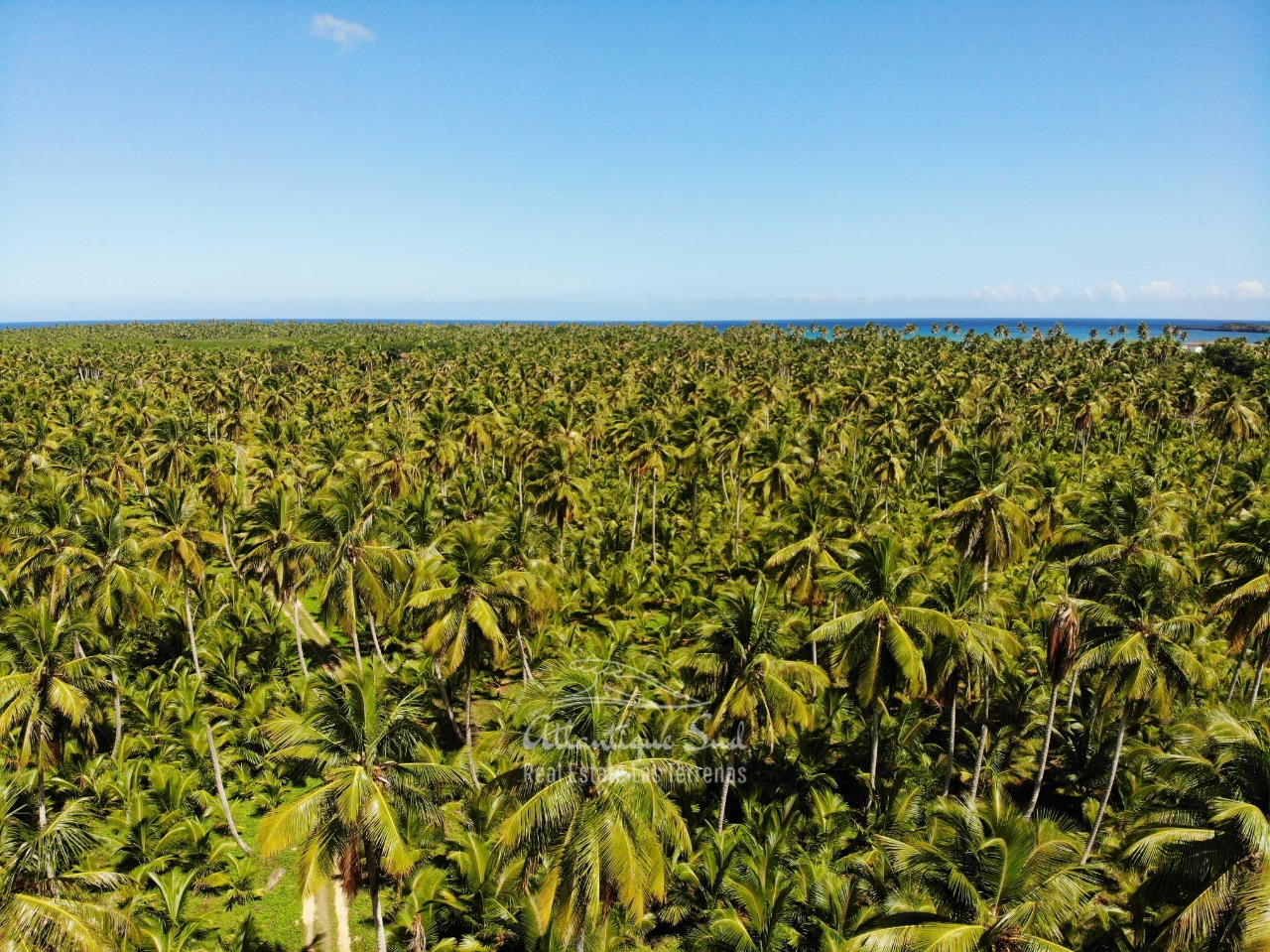 Land for sale El Limon Las Terrenas DR 21.jpeg
