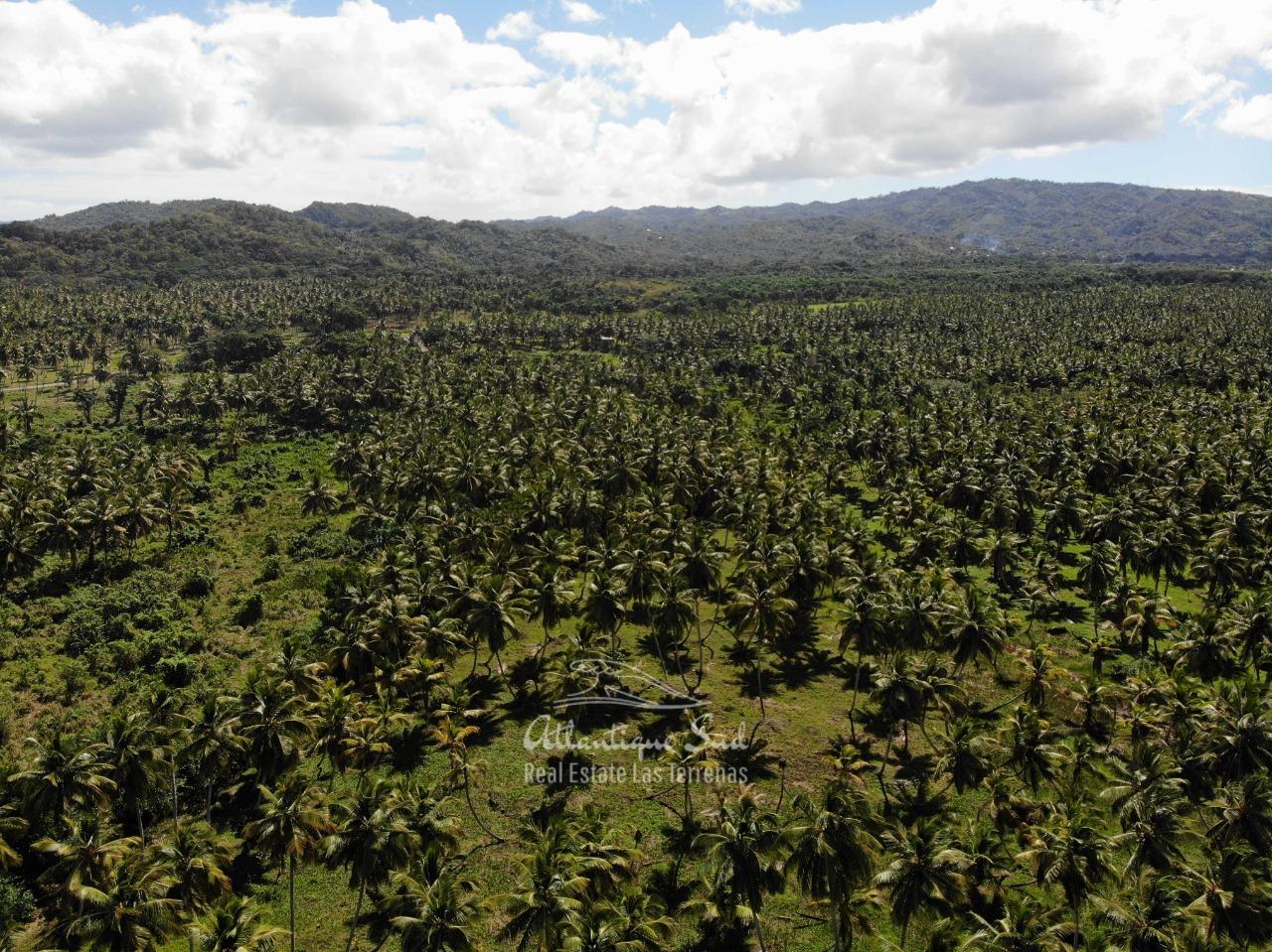 Land for sale El Limon Las Terrenas DR 24.jpeg