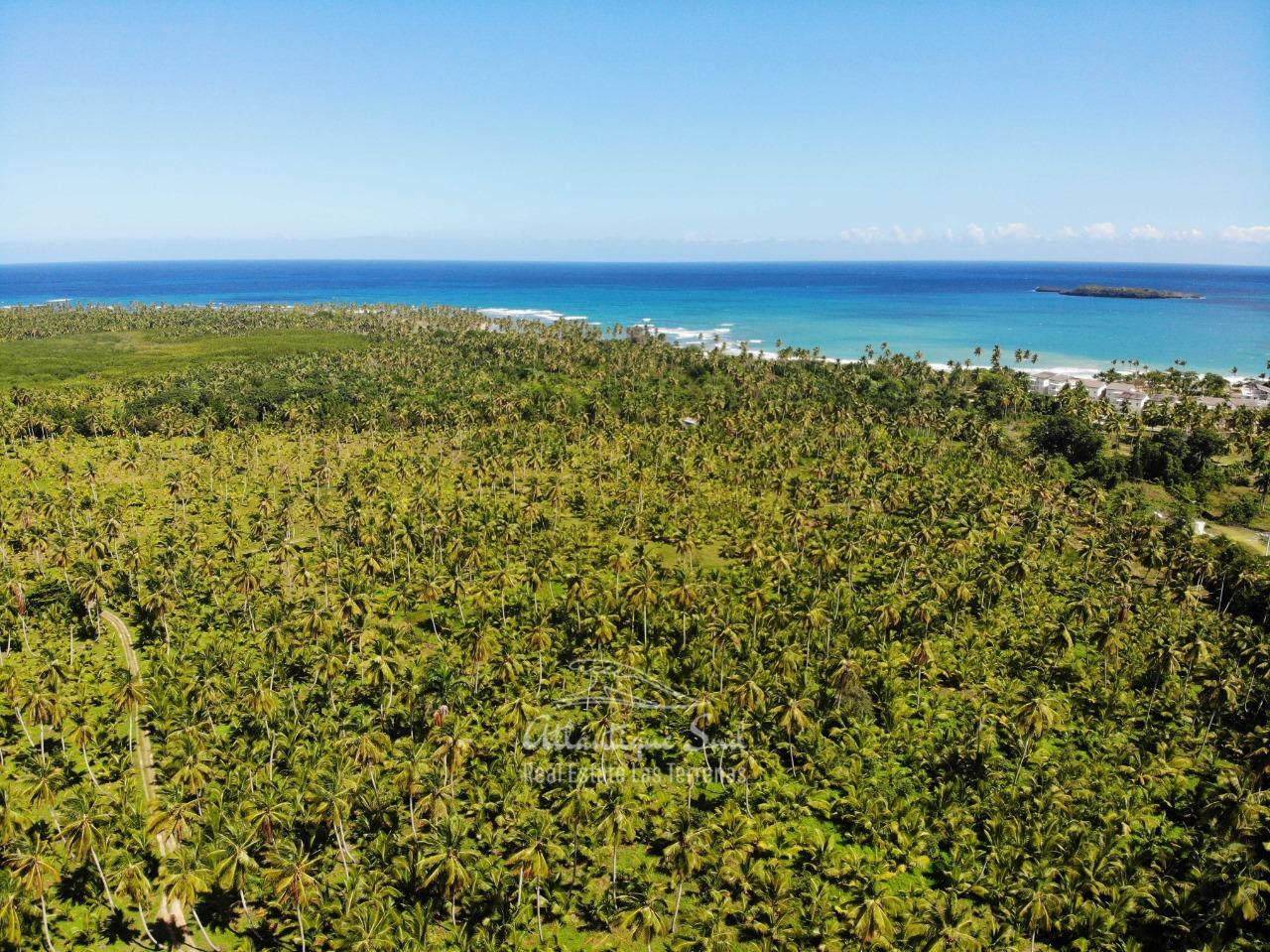 Land for sale El Limon Las Terrenas DR 26.jpeg