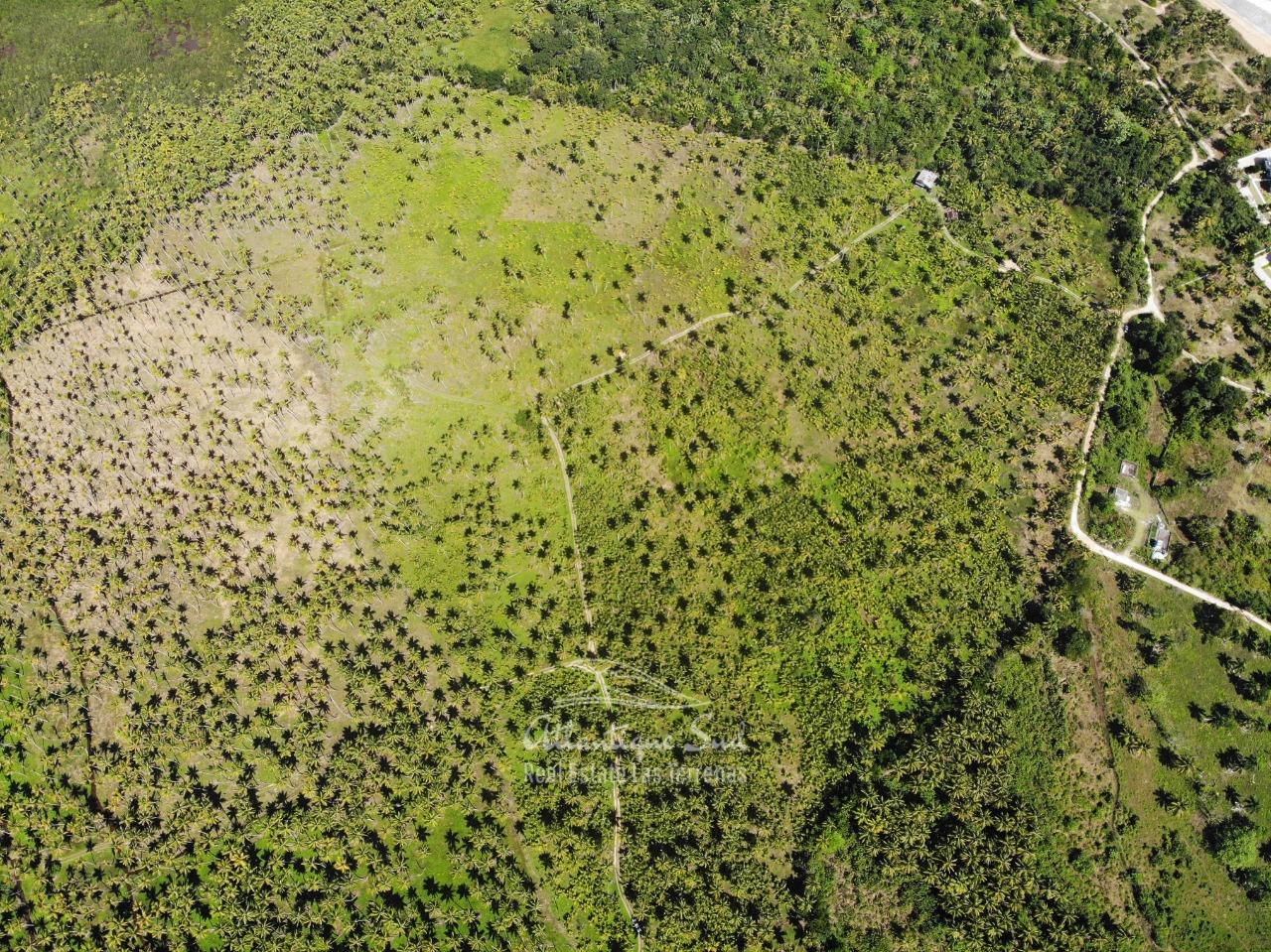 Land for sale El Limon Las Terrenas DR 29.jpeg