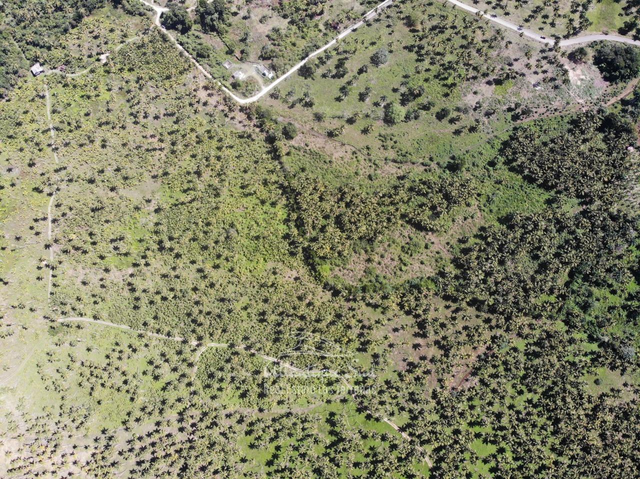 Land for sale El Limon Las Terrenas DR 31.jpeg