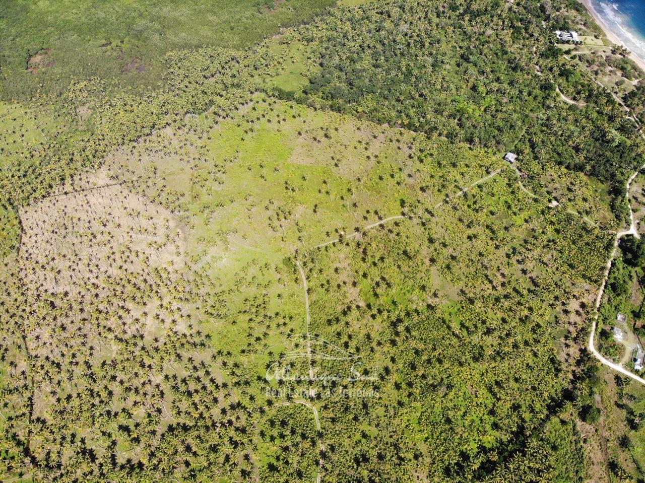 Land for sale El Limon Las Terrenas DR 33.jpeg