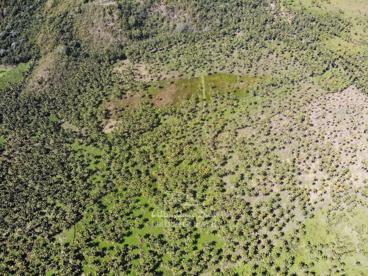 Land for sale El Limon Las Terrenas DR 34.jpeg