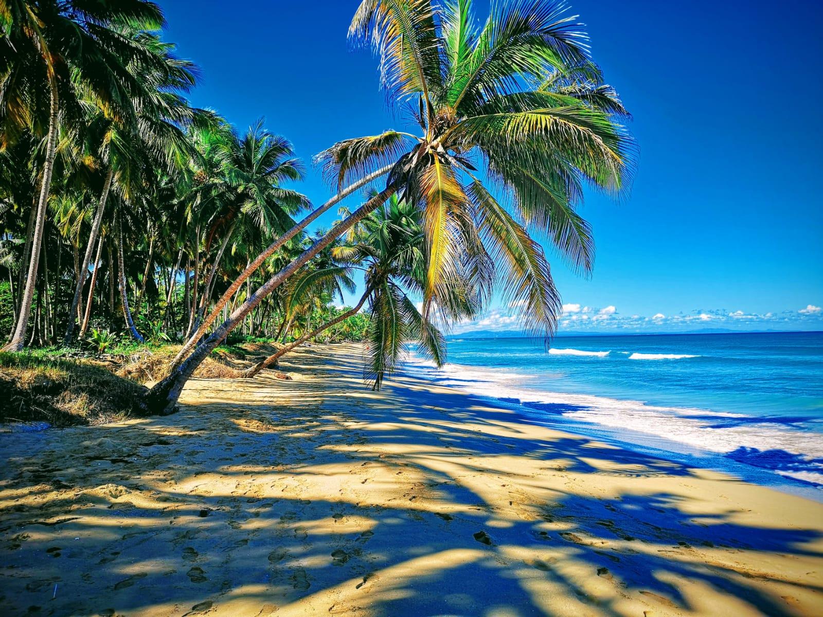 Virgin beach in las terrenas.jpeg