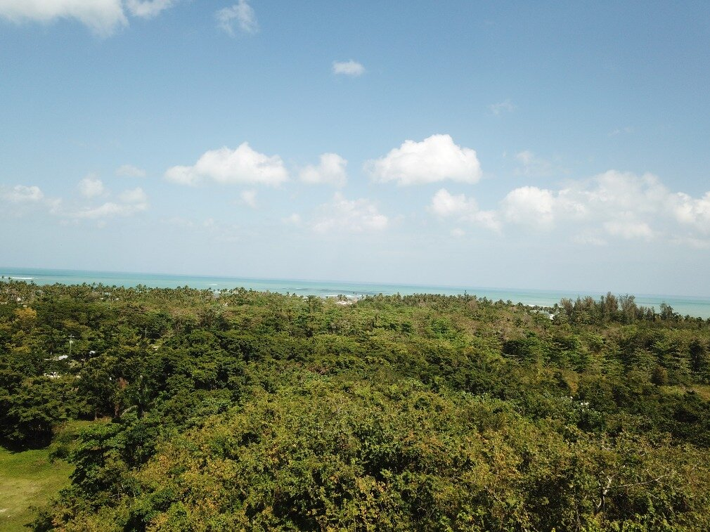 first line hill for sale las terrenas 4.jpeg