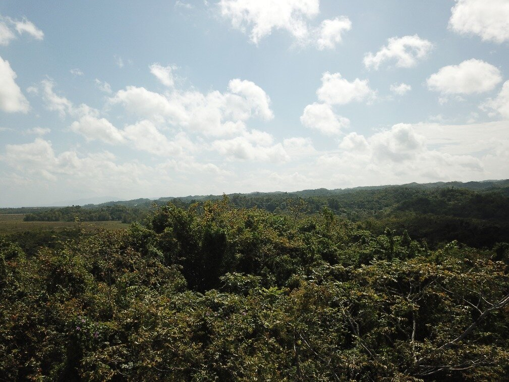 first line hill for sale las terrenas 7.jpeg