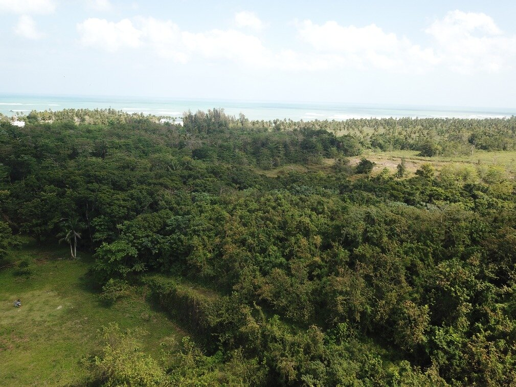 first line hill for sale las terrenas 11.jpeg
