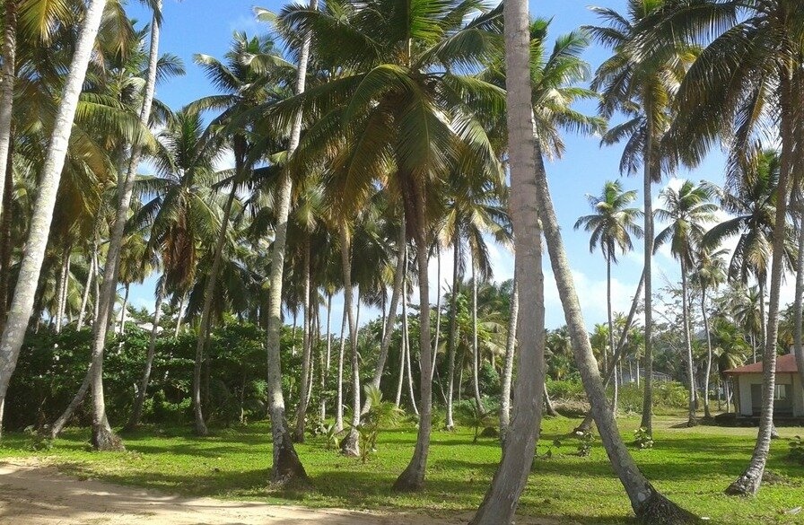 beachfront land for sale in coson 6.jpeg