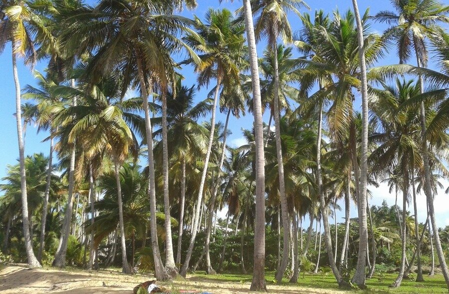 beachfront land for sale in coson 7.jpeg