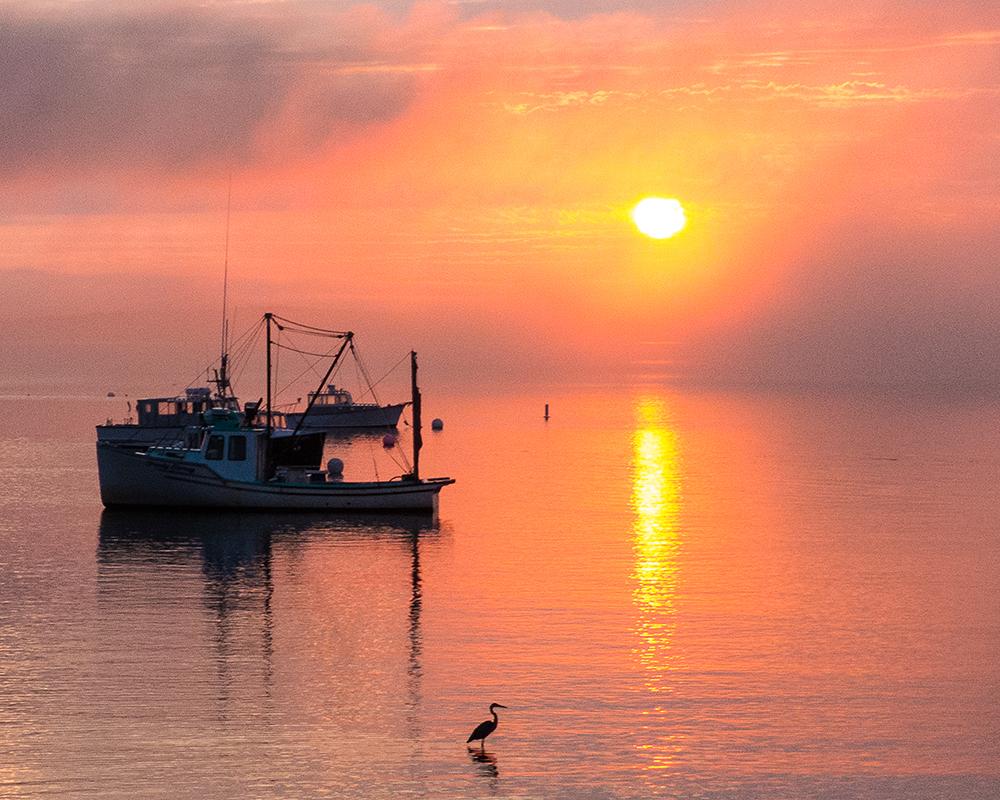 Egret at Dawn_1000.jpg