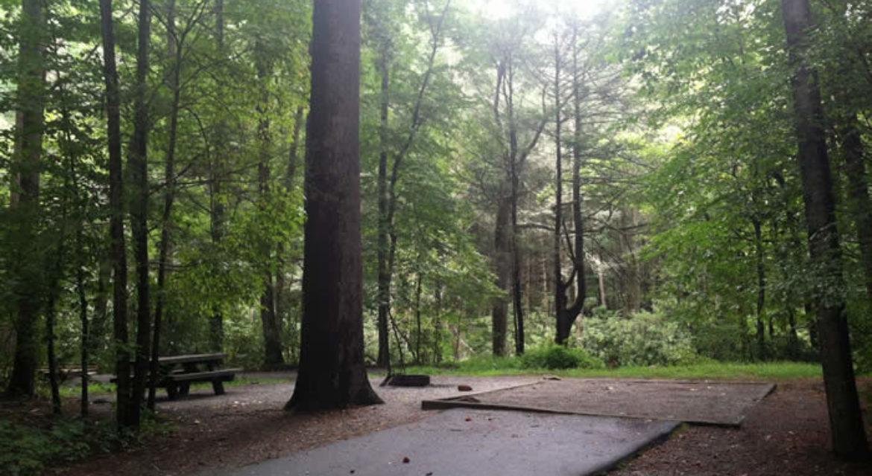 Davidson-RIver-Campground-Campsite.jpg
