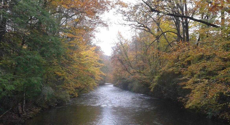 Davidson-River.jpg