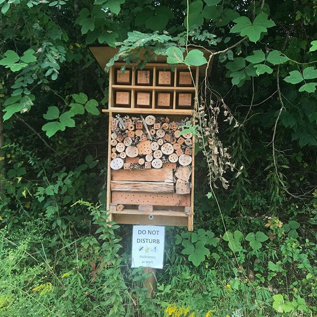 our #WCW goes out to our queen bee ruling her bee mansion. 🐝⠀ ⠀  #savethebees #beehotel #beehouse #helpthem #campground #camping #beescamptoo #beesthatbuzz #lakepowhatan #lakepowhatancampground #asheville #visitasheville #ashevilenc #828isgreat