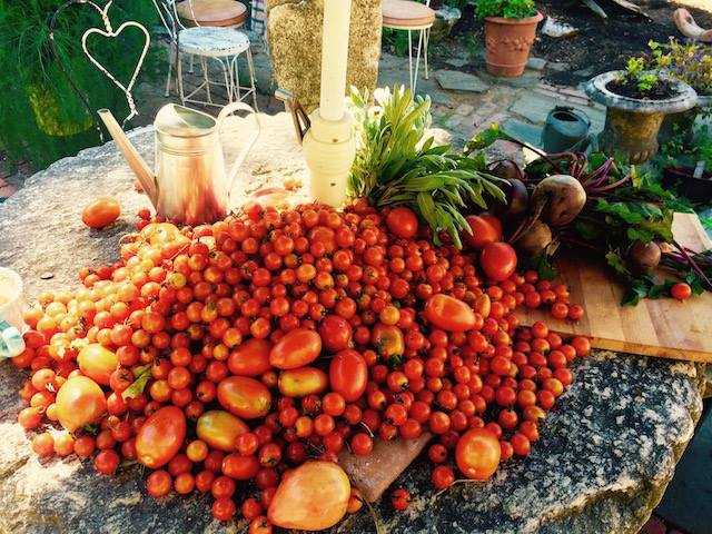 tomato harvest.jpeg