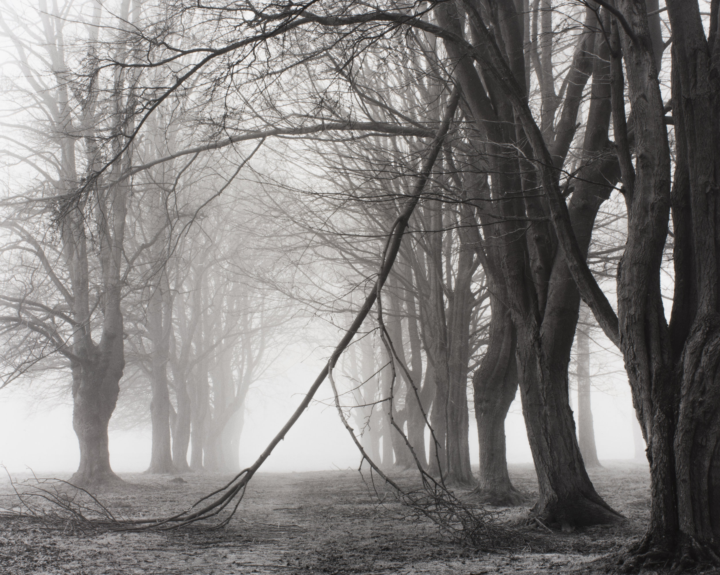 Avenue of Trees, Newfoundland Memorial Park, Somme, photographer, Peter Cattrell, 2000