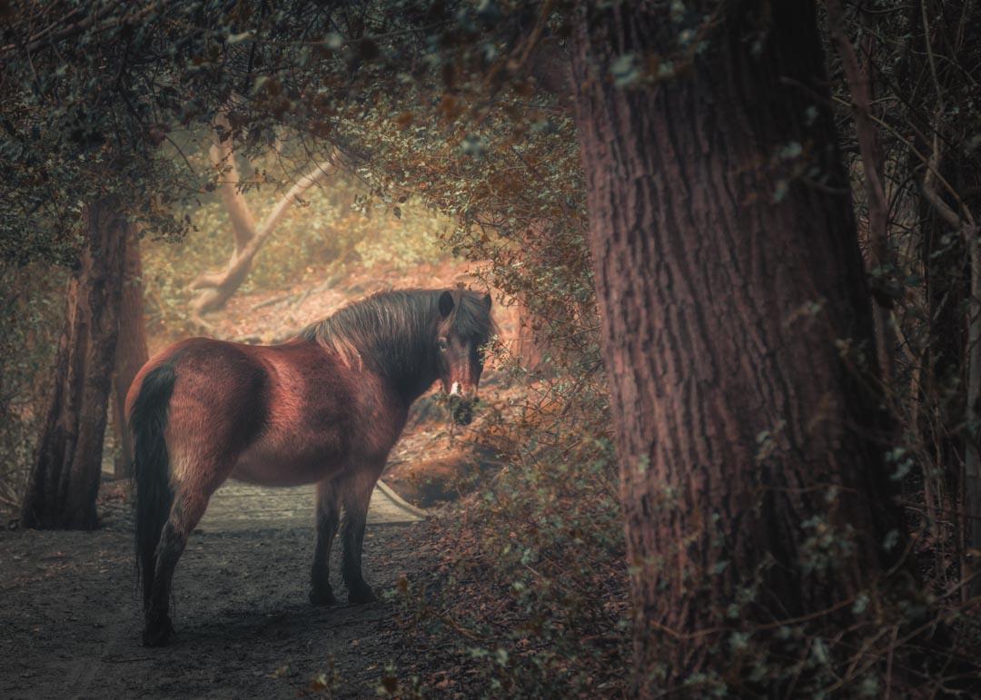 Sutton Pony