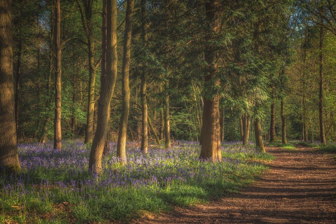 Spring in Haywood No 2