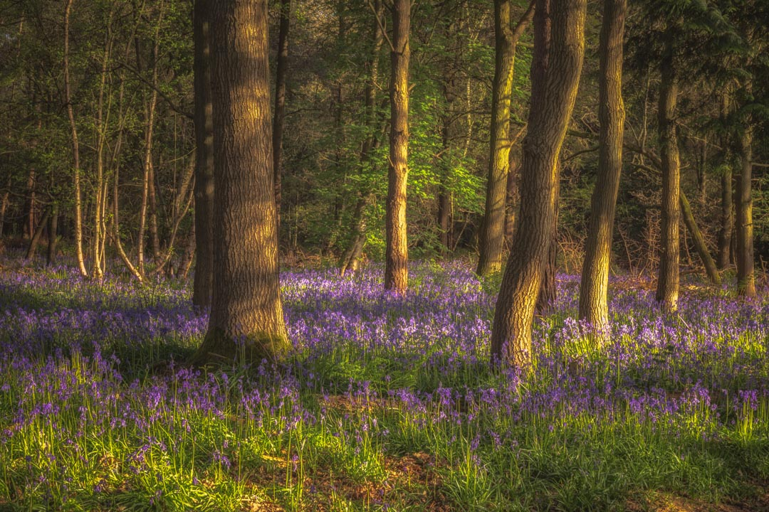 Spring in Haywood No 1