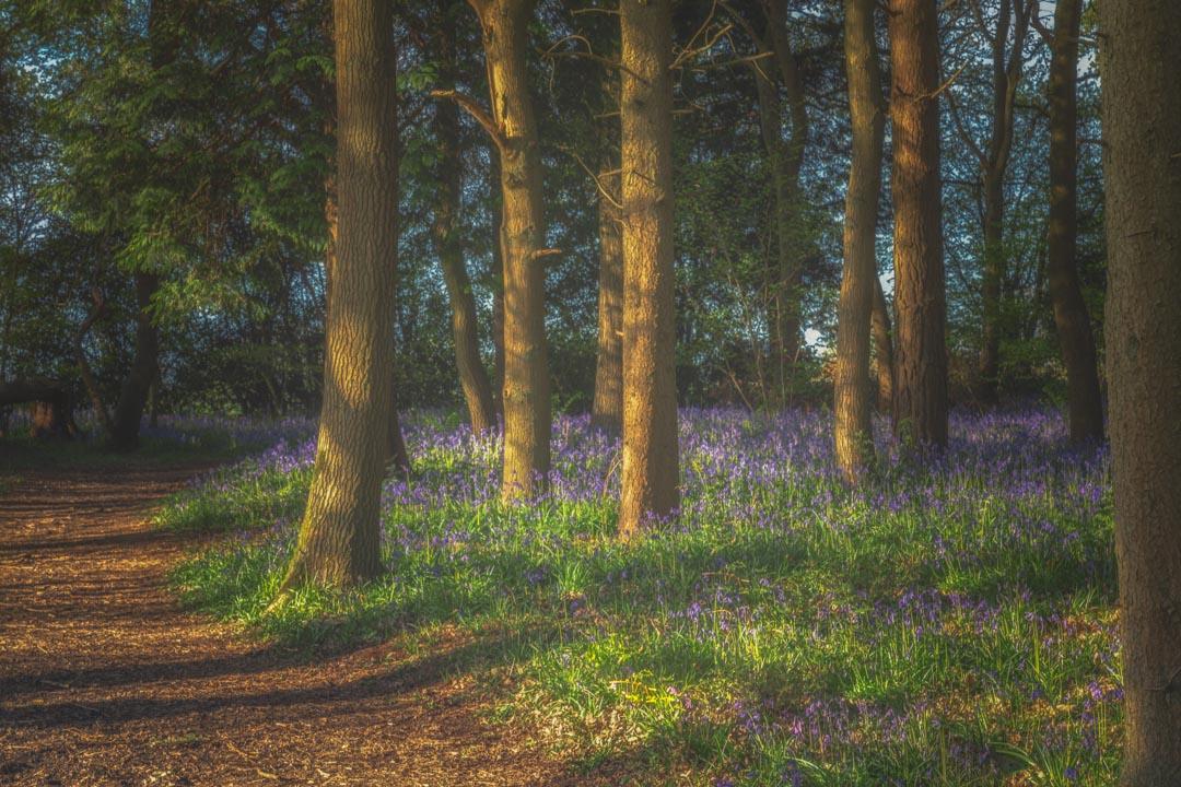 Spring in Haywood No 3