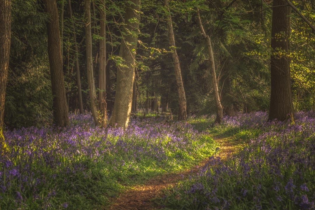 Spring in Haywood No 4