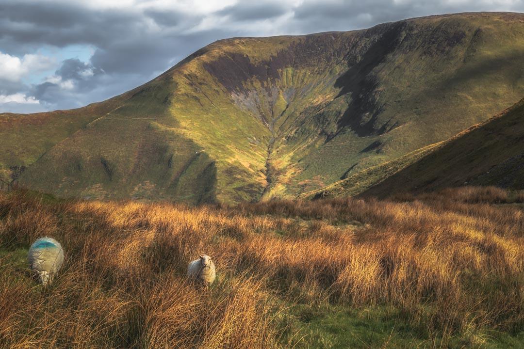 Mountain Sheep Disturbance