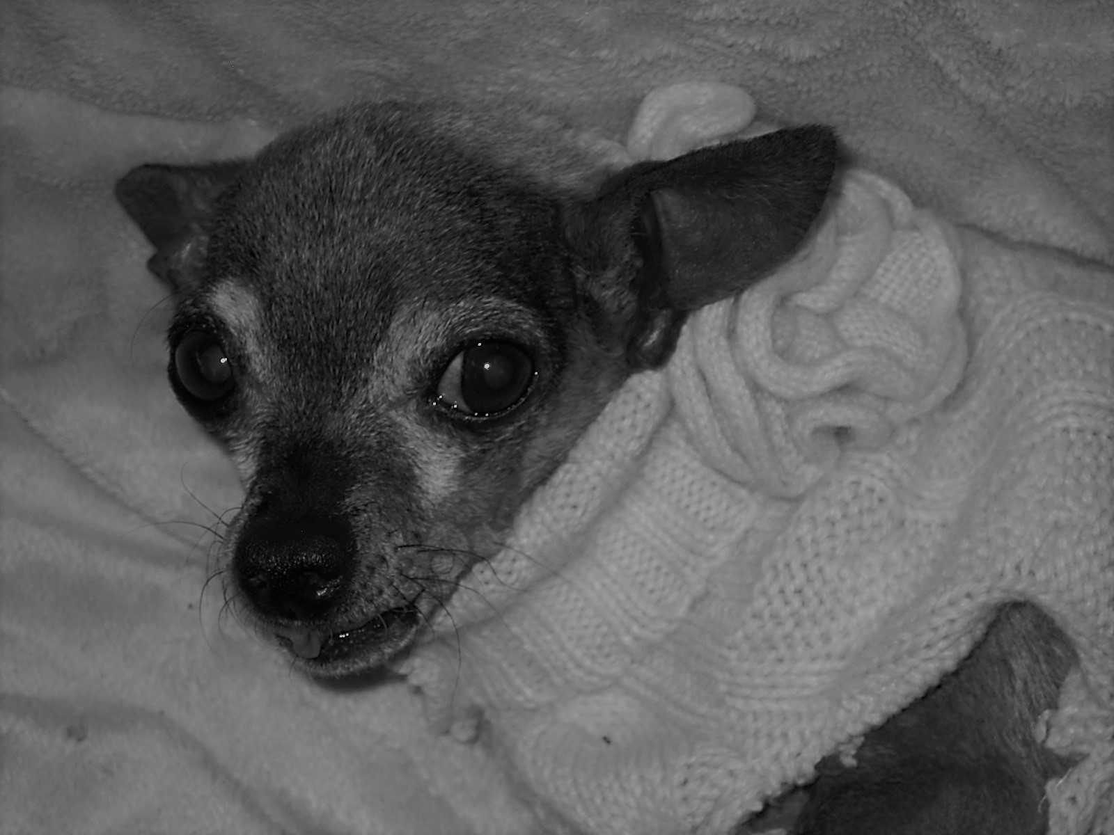 Mildred - 14-years-oldMildred was one of my heart dogs.She had a disorder that caused her legs not to work very well. So I carried her everywhere.She died of heart failure.