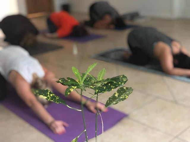 🌱Tonight was magical ✨ * * Next sesh is Thurs July 25th at 6:30pm @ Sano Acupuncture * 🎟Eventbrite link in bio * * #Yoga #YogaForEveryBody #BoogieDownYoga #BronxYoga #SouthBronxYoga #HuntsPoint #YogaTeacher #BilingualYoga