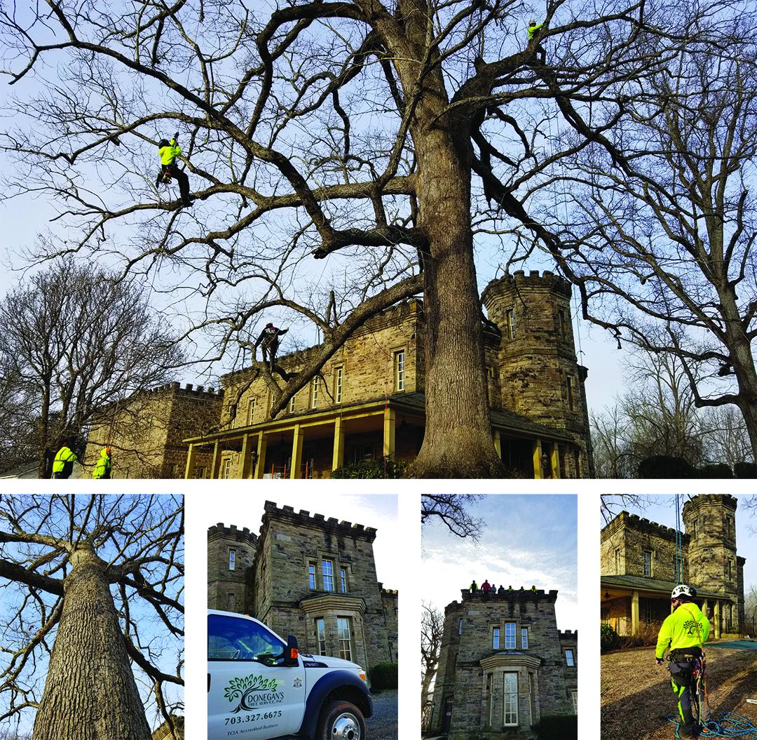 big tree collage.jpg