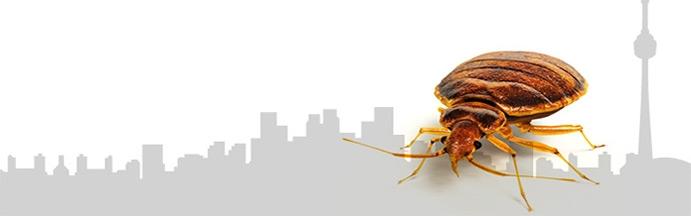 Xtermine Punaise Montréal est née dans l'optique d' offrir un service d'extermination de qualité, sécuritaire et garantie.   Si vous êtes propriétaire d'immeubles à revenus , laissez-nous s'occuper de vos locataires et de communiquer l'information nécessaire concernant le traitement.  Contrairement à beaucoup d'autres entreprises,  nous priorisons la bonne communication  et prenons le temps de répondre aux questions.   Nous visons l'excellence dans le domaine !   Choissisez Xtermine pour enrayer votre problème de punaises de lit et retrouver le sommeil.  Appelez-nous dès maintenant au :  514-416-0730.