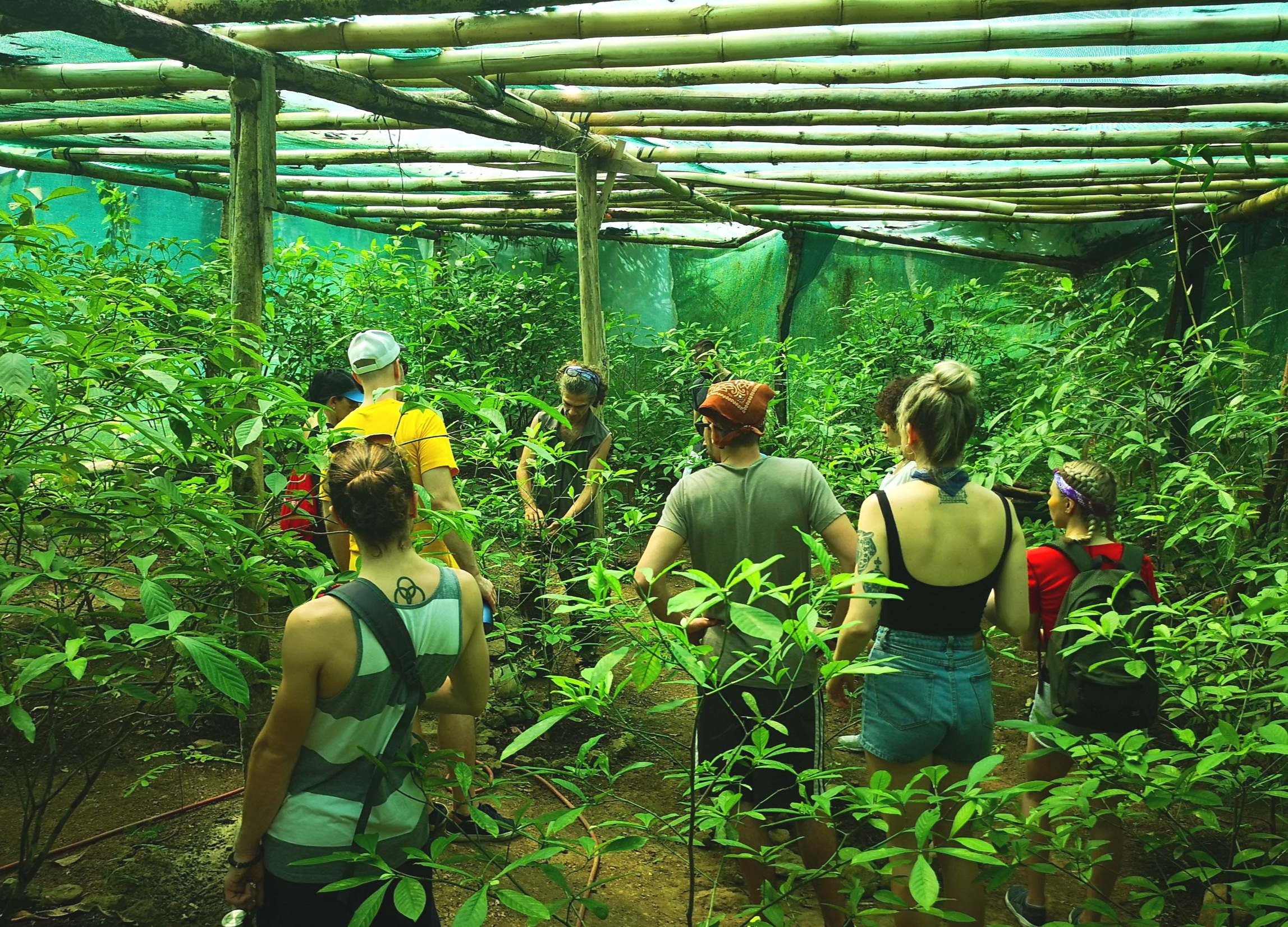 Tour of the Chacruna Greenhouses