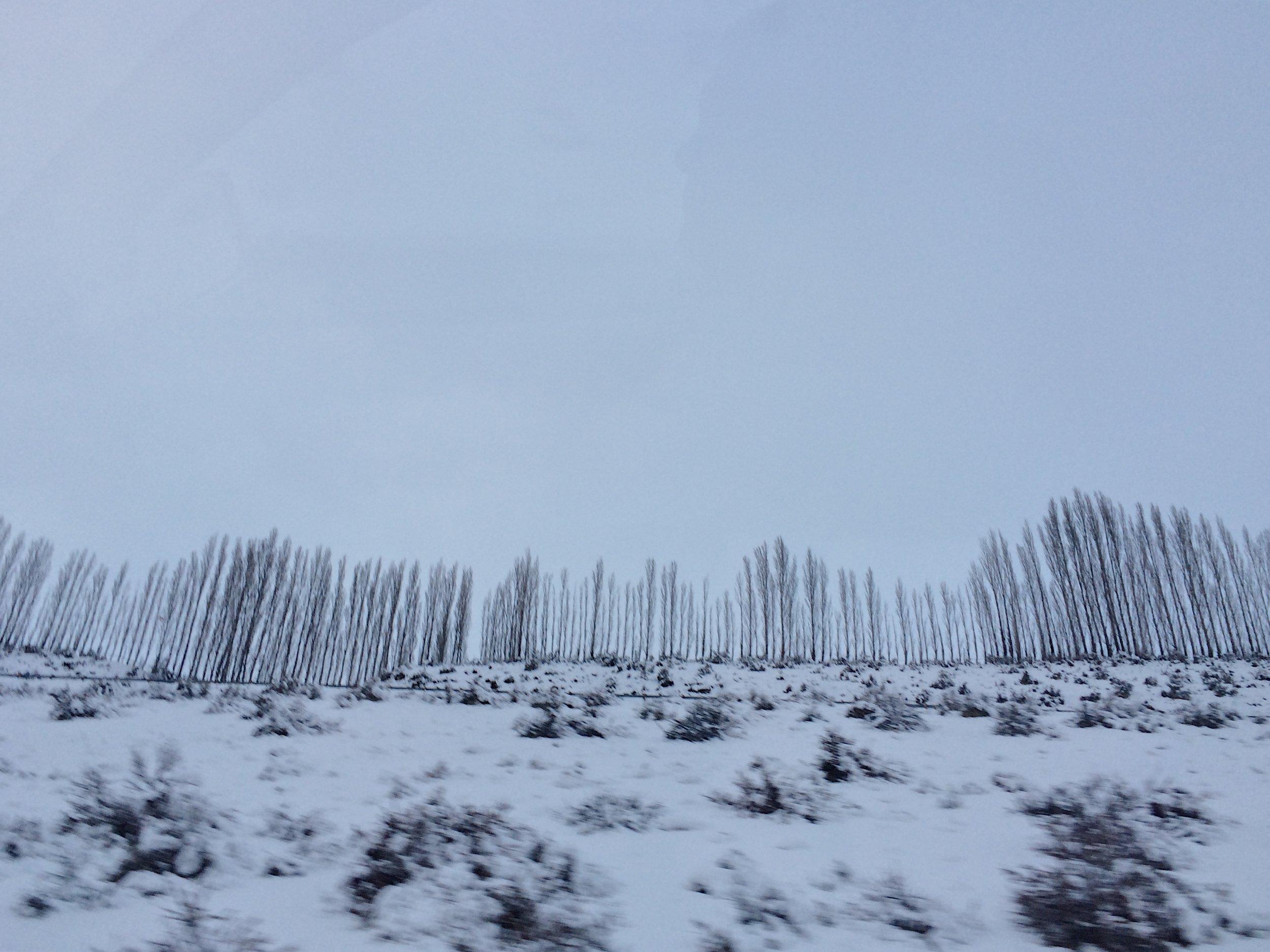 windbreakers.jpg
