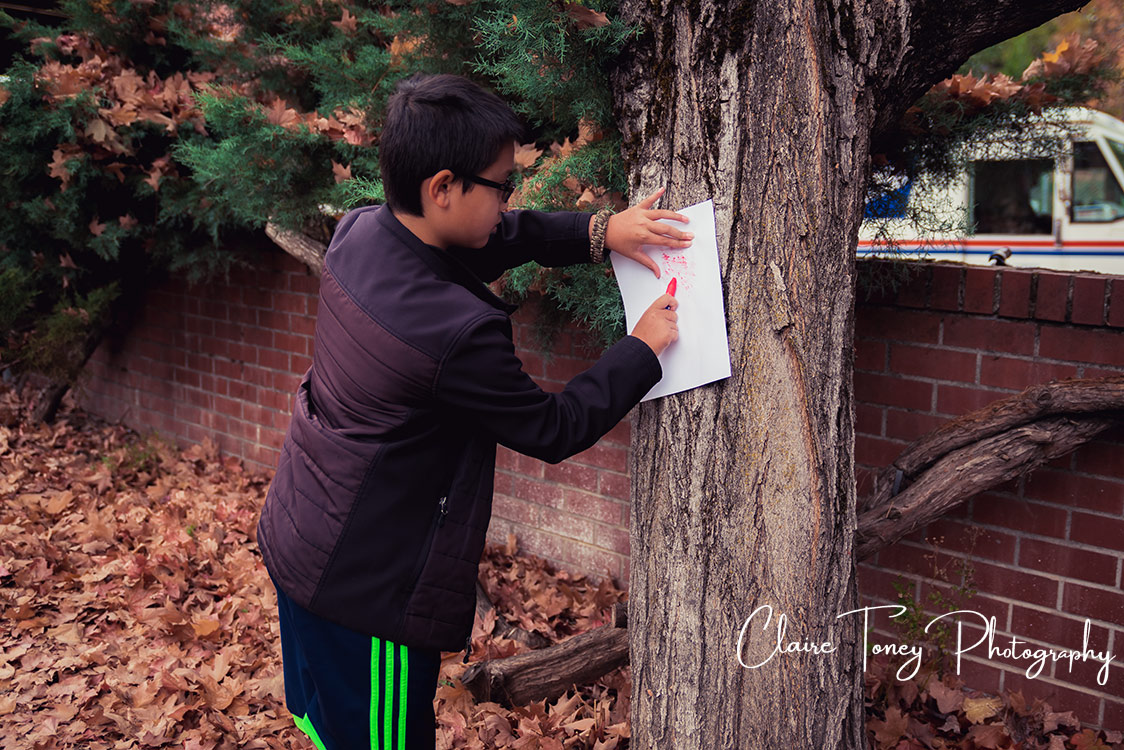 Tree rubbing activity on a maple tree.