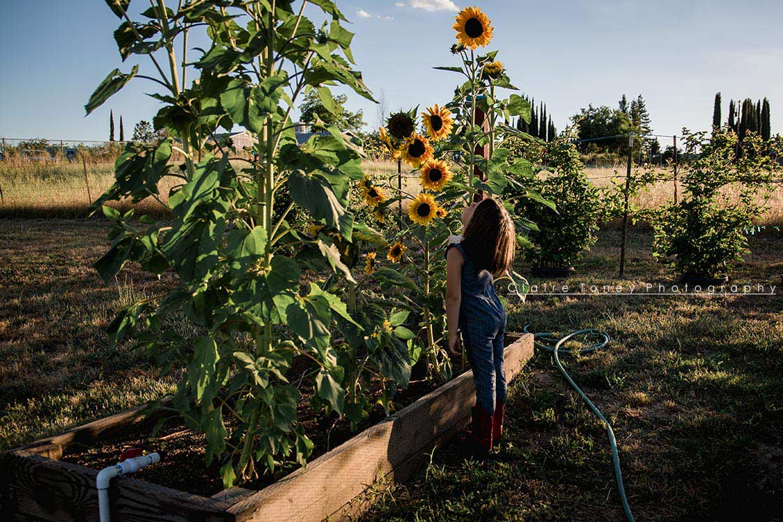 Little girl looking at her sunflowers