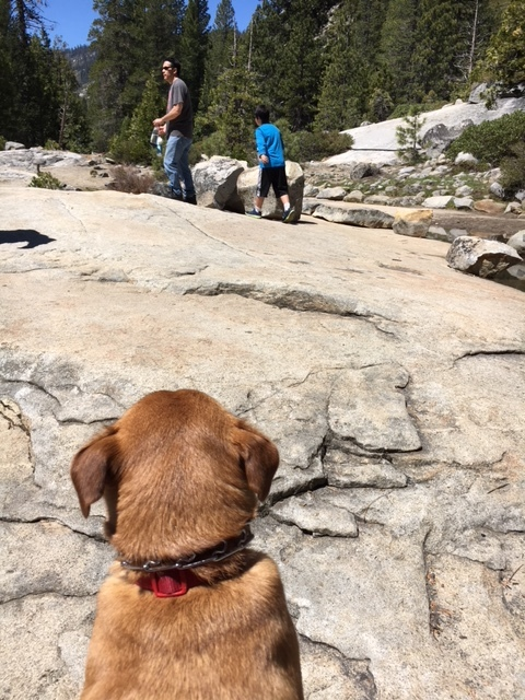 The back view of a little brown dog looking at a man and a boy